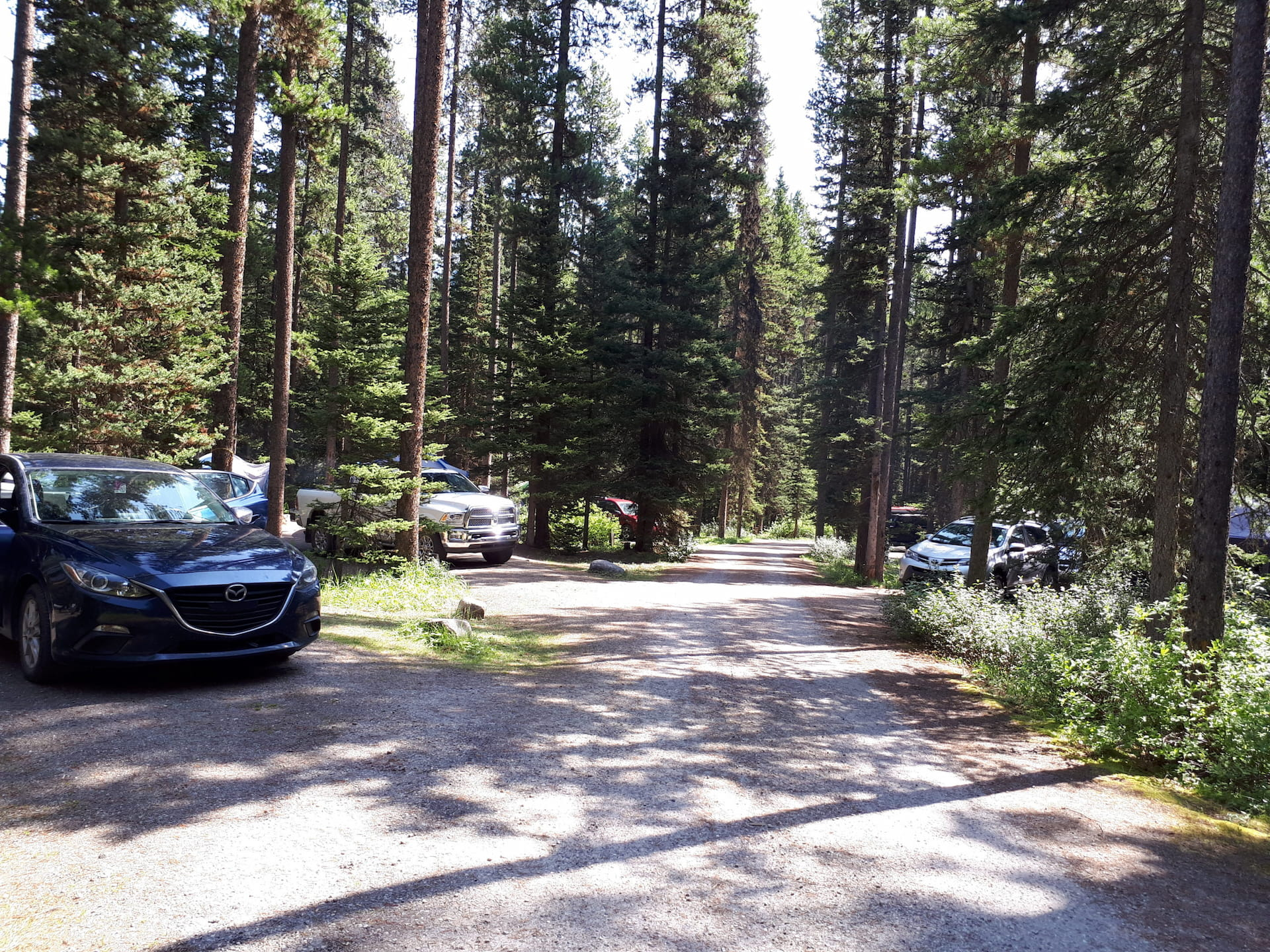 View of a loop in Lake Louise Campground. The campsites are large and well treed.